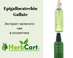Галлат эпигаллокатехина/Epigallocatechin Gallate